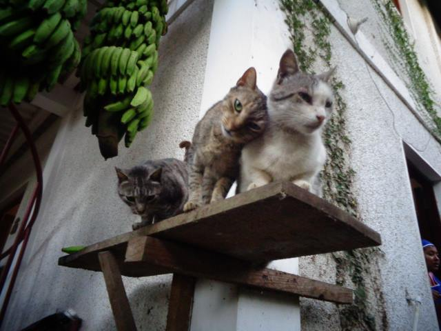 Animal Rescue & Sanctuary | La Mariposa